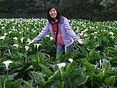 竹子湖海芋田:DSCF3241.jpg