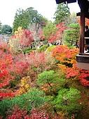2008年秋日本賞楓紅葉之旅:東福寺紅葉火紅繽紛