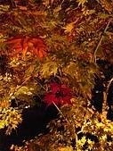 2008年秋日本賞楓紅葉之旅:永観堂禪林寺絢爛淒美的夜楓