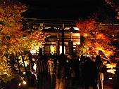 2008年秋日本賞楓紅葉之旅:京都永観堂禪林寺夜楓