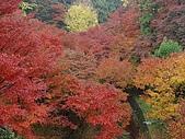 2008年秋日本賞楓紅葉之旅:東福寺─京都賞楓名所中首選的絕佳景點
