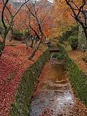 2008年秋日本賞楓紅葉之旅:京都東福寺紅葉