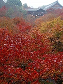 2008年秋日本賞楓紅葉之旅:東福寺通天橋上激情澎湃的賞楓人潮