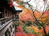 2008年秋日本賞楓紅葉之旅:東福寺通天橋紅葉