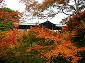 2008年秋日本賞楓紅葉之旅:東福寺通天橋紅葉繽紛