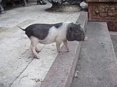 20110228金山:P2280065.JPG