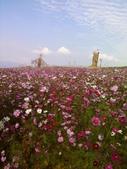 //埔里之花卉//:1645980357.jpg