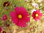 //埔里之花卉//:1645980360.jpg