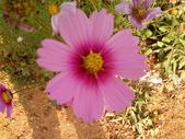 //埔里之花卉//:1645980361.jpg