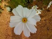 //埔里之花卉//:1645980362.jpg