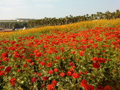 //埔里之花卉//:1645980374.jpg