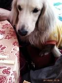 你們和我家狗兒:1905190460.jpg