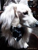 你們和我家狗兒:1905190461.jpg
