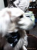 你們和我家狗兒:1905190462.jpg