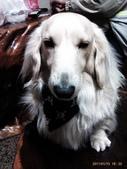 你們和我家狗兒:1905190463.jpg