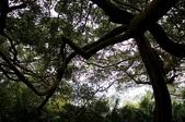 鸞山部落森林博物館:nEO_IMG_IMGP0653.jpg
