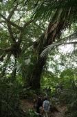 鸞山部落森林博物館:nEO_IMG_IMGP0661.jpg