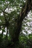 鸞山部落森林博物館:nEO_IMG_IMGP0662.jpg
