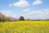 【19】3.31~4.4關東近郊追櫻大隊: