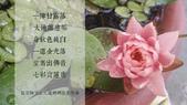 詩詞偈頌:弘聖師父上人送媽媽往生西方極樂.jpg