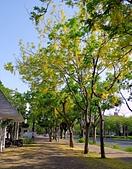 台南市阿勃勒花:IMG_0026aa.jpg