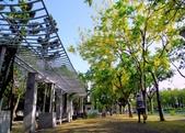 台南市阿勃勒花:IMG_0032aa.jpg