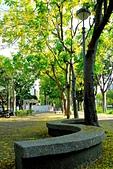 台南市阿勃勒花:IMG_0042aa.jpg