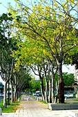 台南市阿勃勒花:IMG_0066aa.jpg